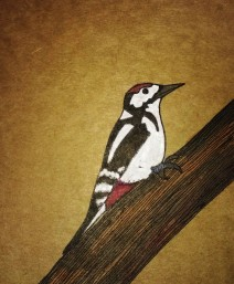 Woodpecker, pen and ink
